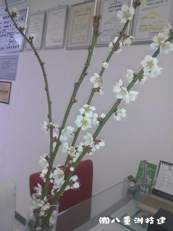 3月6日(火)梅の花